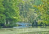stock photo of bayou  - A bridge crosses a pond in the southern Low Country of South Carolina - JPG