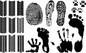 picture of paw-print  - A collection of Vector Fingerprints Footprints and more - JPG