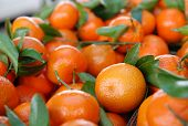 picture of tangelo  - Fresh oranges for sale at farmers market - JPG