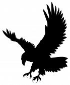 foto of eagles  - Abstract vector illustration of flying eagle silhouette - JPG