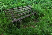 Abandonned bench surrounded by grass