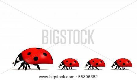 Ladybirds In A Horizontal Row