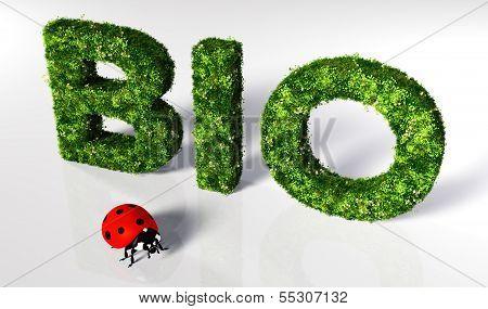 Ladybirds With Bio Text