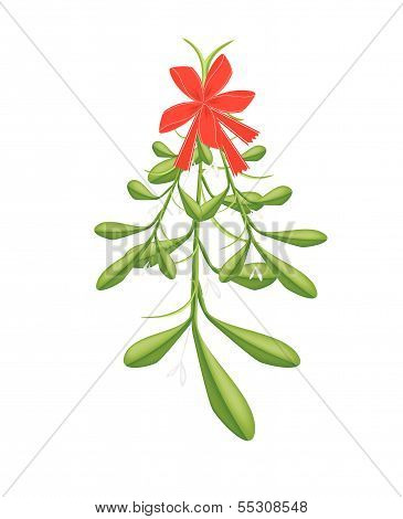 Hanging Lovely Green Mistletoe With A Red Bow