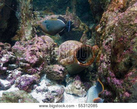 Amphora from ship wreck underwater