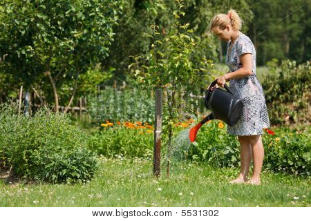 Woman Watering Apple Tree