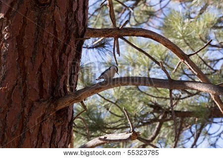 Woodpecker Perch