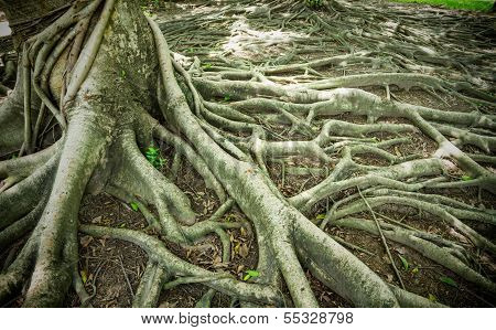 Strong Root Background