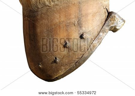 Isolated Horse Hoof