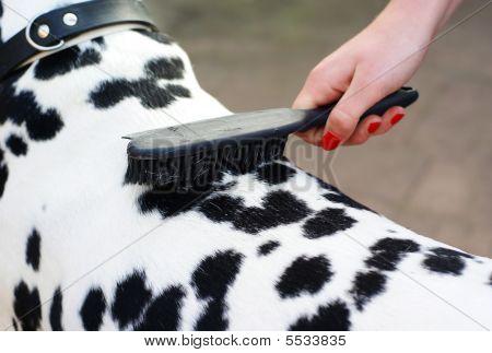 Brushing The Dog.