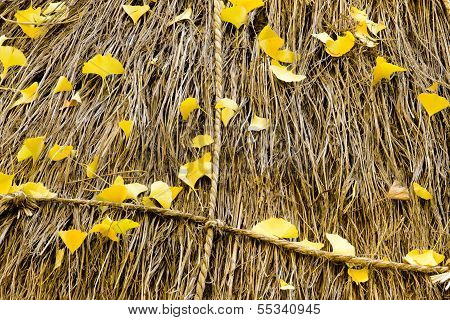 Gingko leaves on the rice straw