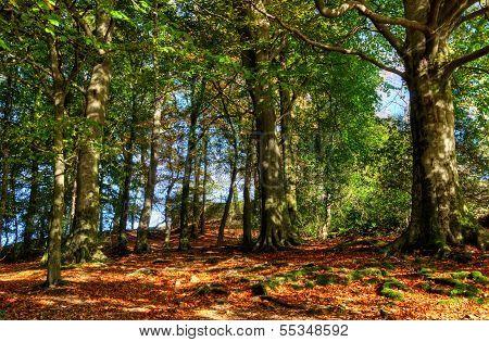 Autumn woodland scene