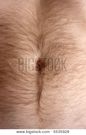 Male Hairs Belly