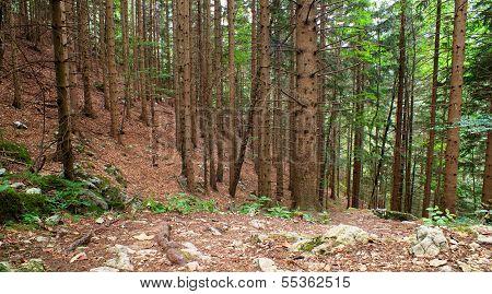 Forest, Slovenian Julian Alps