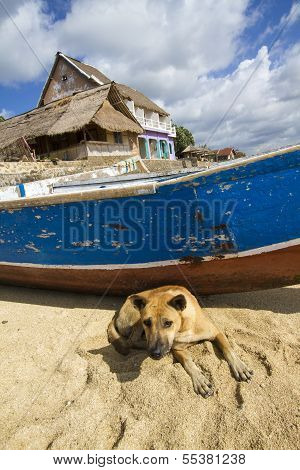 alone dog on the beach