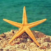 foto of echinoderms  - picture of a starfish on a rock of a beach - JPG