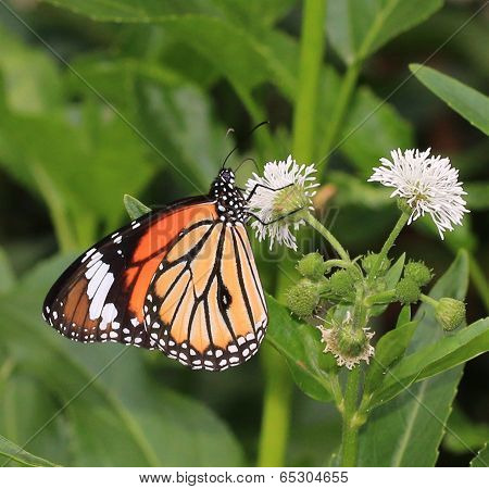butterfly and blooming flowers
