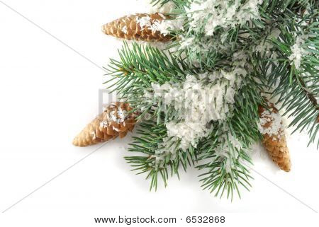 Fir Tree In Snow