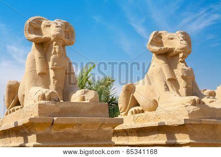 Sphinxes. Luxor, Egypt