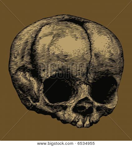 skull in the style of engravings