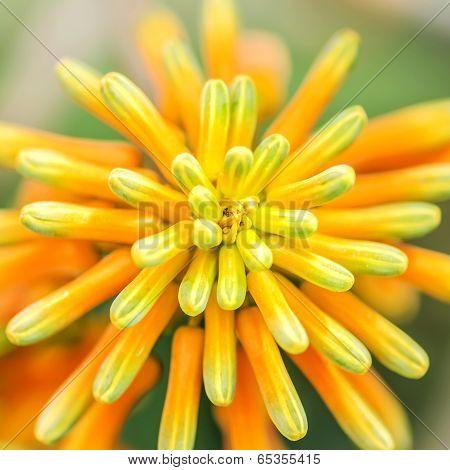Atom Flower Plant