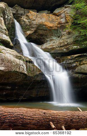 Cedar Falls And Fallen Tree