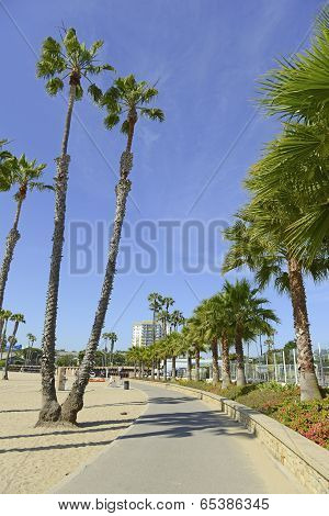 Beach Scene in Southern California with sand and palm trees