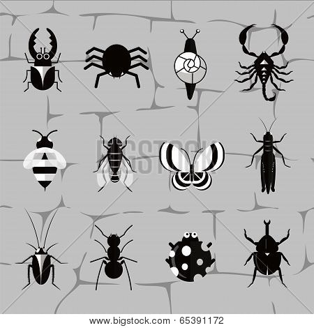 Insect world in black and white tones