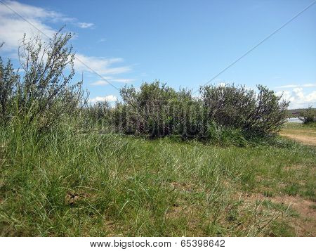 shrubberies and herbs in tuvinian steppe