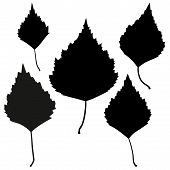foto of birching  - Set of vector black birch leaves outline on the white background for your design - JPG