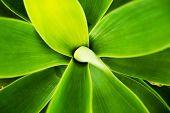 pic of cactus  - Green Cactus Macro Background - JPG
