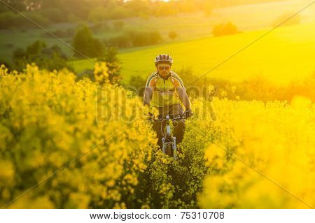 Mtb biker is cycling in yellow rapeseed field
