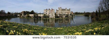 Leeds Castle Spring Daffodils Kent