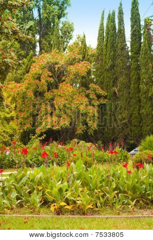 Park with red colors, high cypresses and a blossoming tree