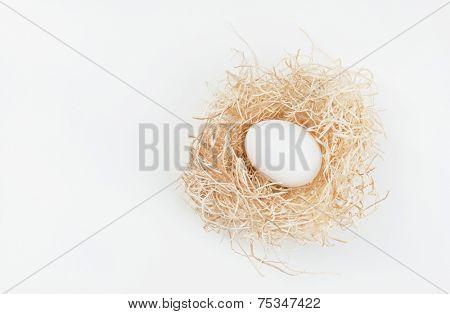 Egg in Nest on White