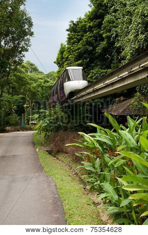 Monorail train in Tropical Forest
