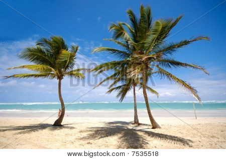Palms On Beach