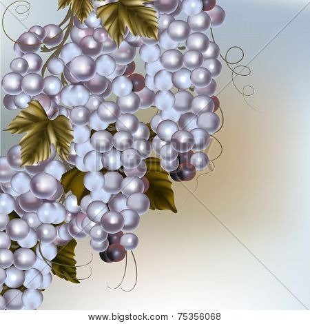 Background With Vector Wine Grape And Free Space