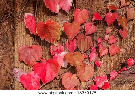 Lovely autumn leaves