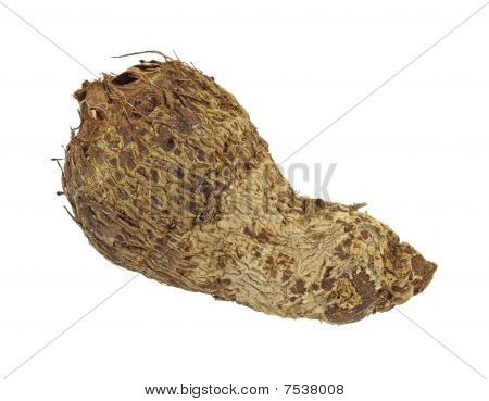 Single malanga root