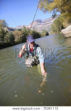 Closeup of fly fisherman releasing trout in river