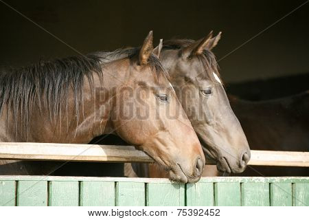 Mares stands in the barn gate