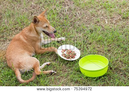 Sick dog is eating food on grass