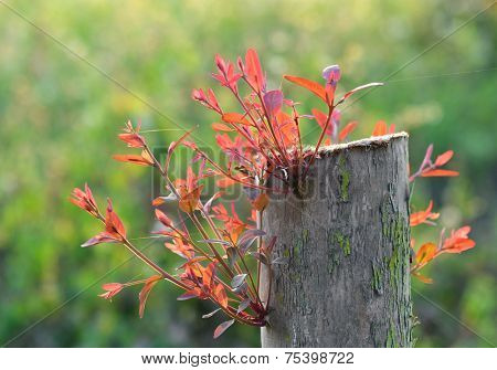 Young shoot on an old stump over Natural background