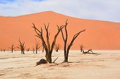 pic of dead-line  - Deadvlei is a white clay pan located near the more famous salt pan of Sossusvlei - JPG