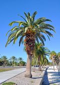 picture of tree lined street  - Palm trees lined up near a beach on a sunny day - JPG