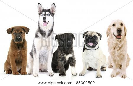 Dogs isolated on white