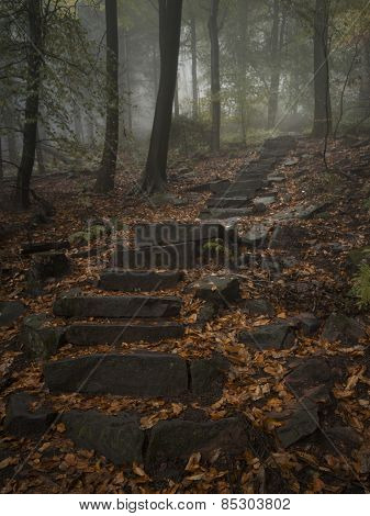 Steps in the woods