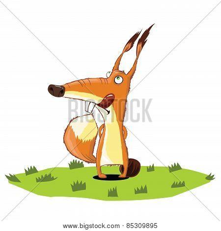 Squirrel standing on grass