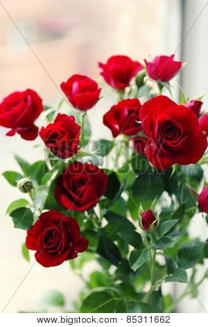 Beautiful red roses on bright background